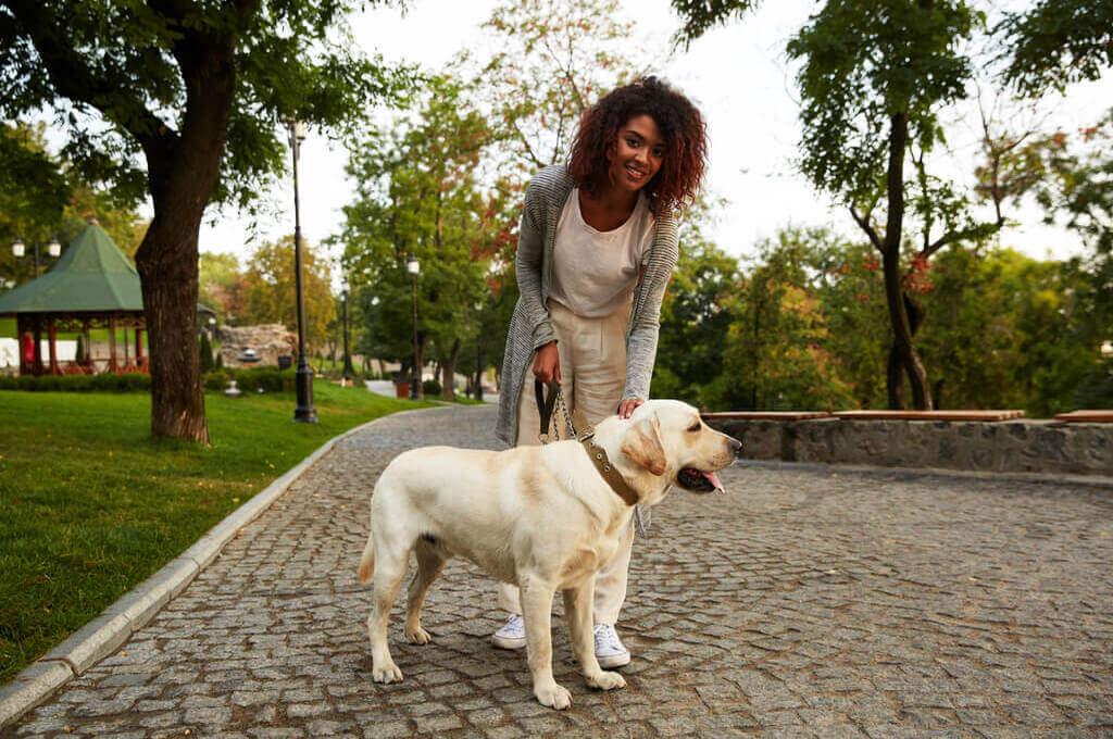 Perro adulto paseando por el parque