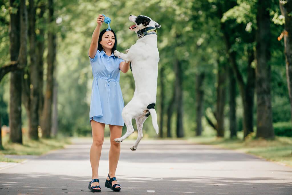 enseñar a un perro a traer cosas