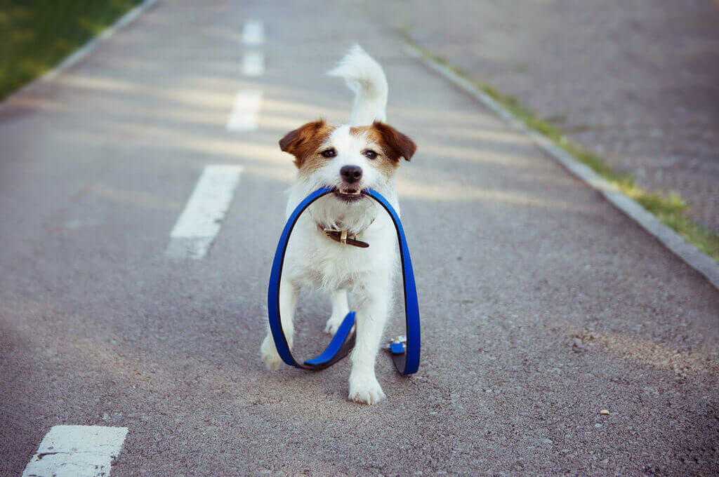 trucos para perros