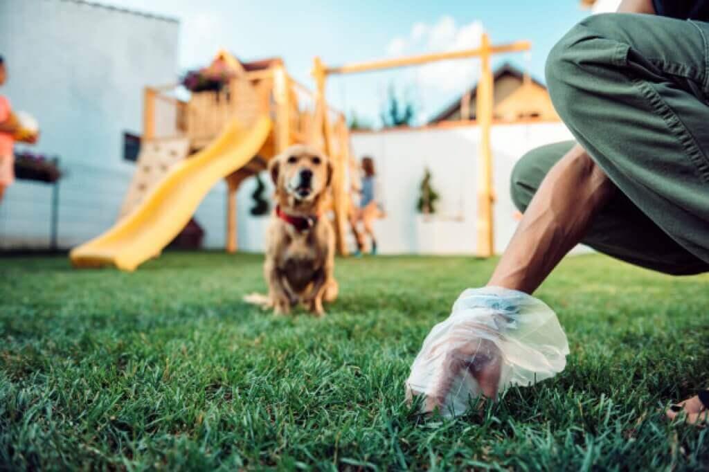 Cómo enseñar a un perro adulto a hacer sus necesidades en la calle