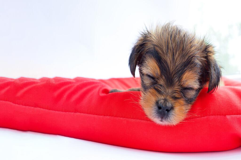 Perrito durmiendo en su cama roja