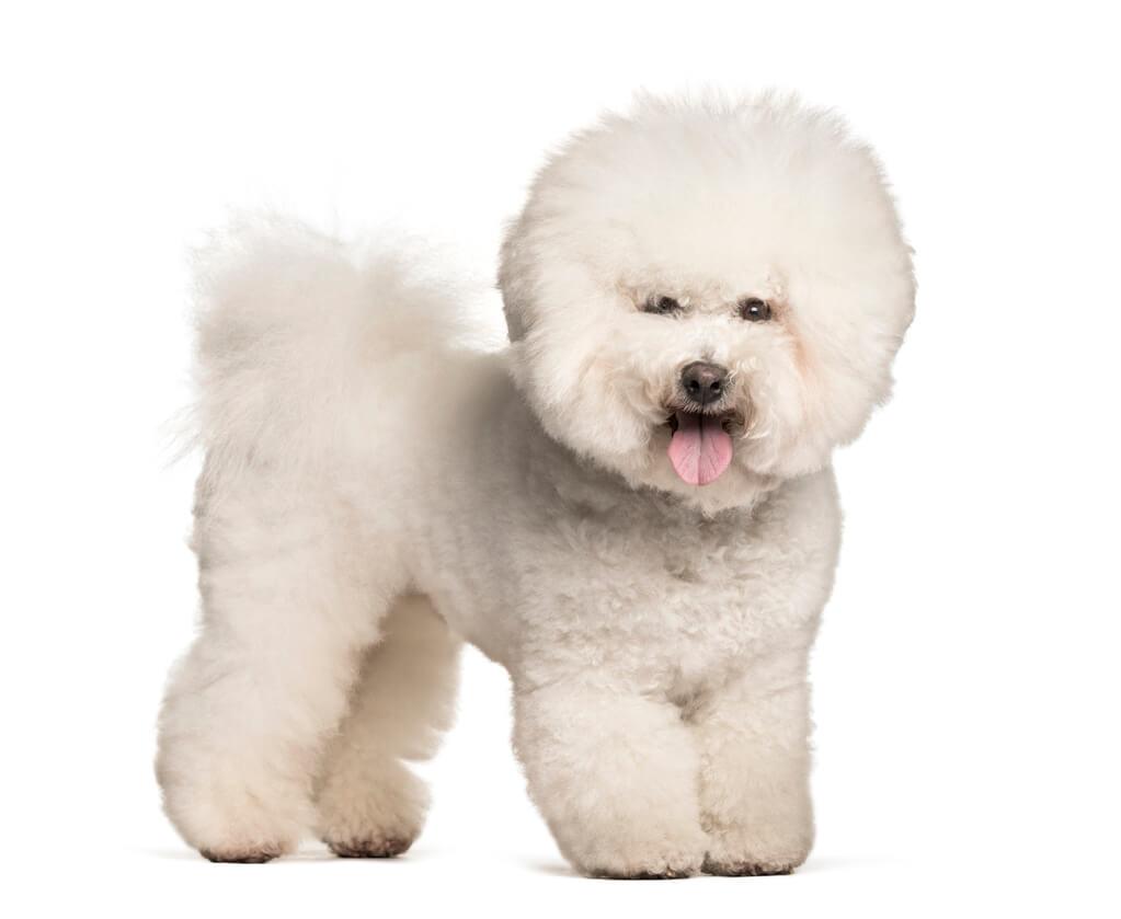 Perro con pelo redondeado