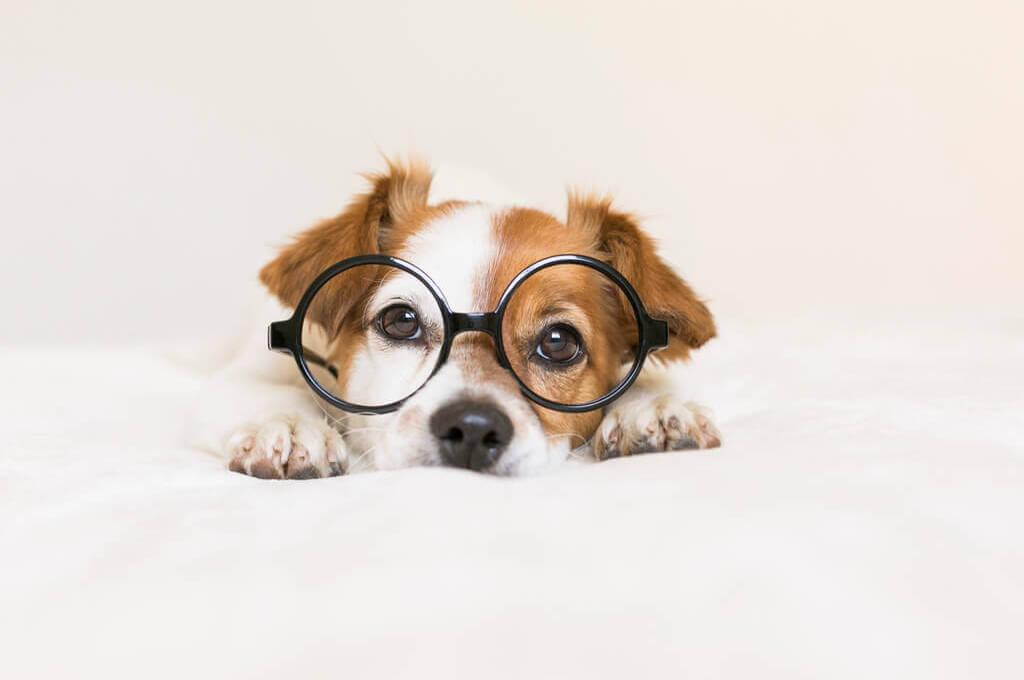 Perro con lentes