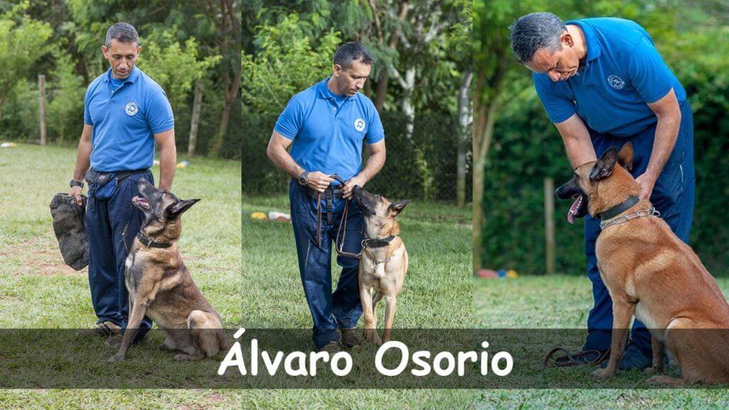 Entrenador canino Alvaro osorio