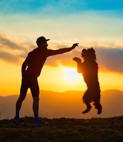 Perro saltando durante entrenamiento