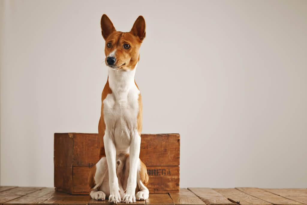 Lindo perro sentado