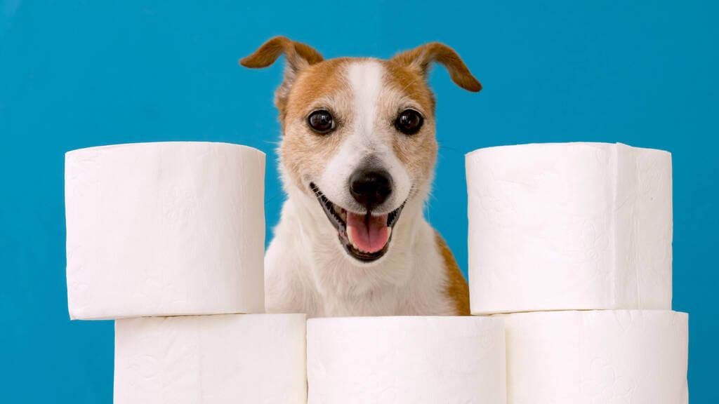 Perro con papel higienico