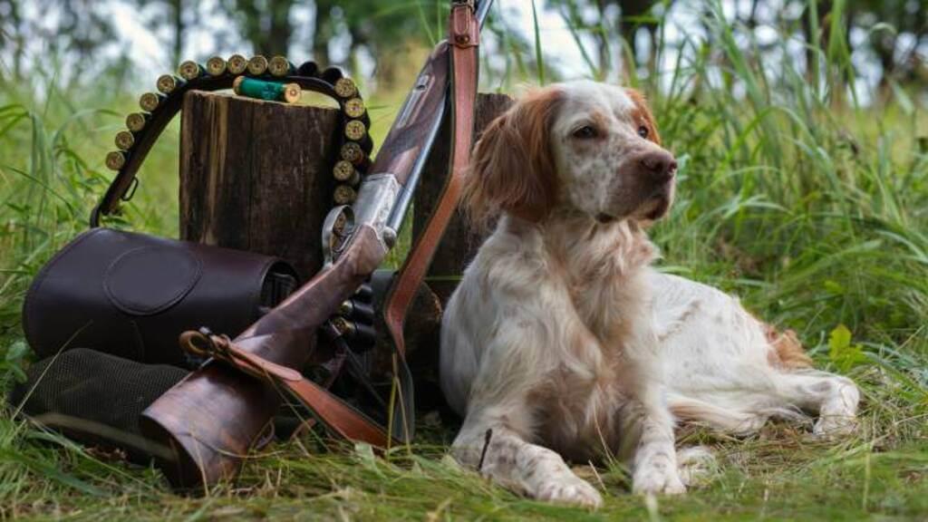 Cómo entrenar a tu perro para cazar