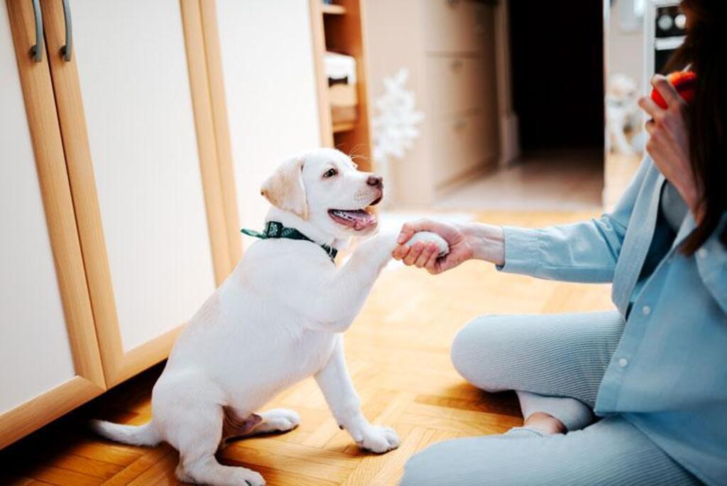 Cómo criar un perro en un departamento pequeño