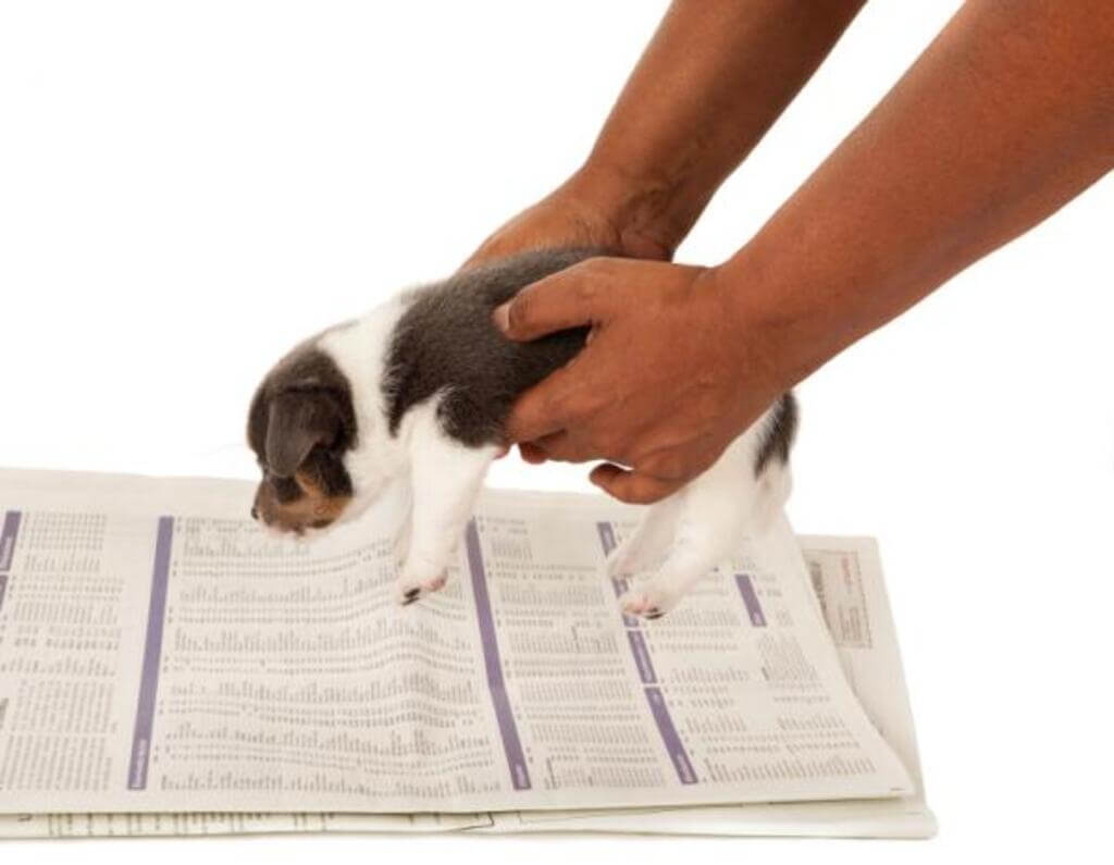 Productos para enseñar perros a hacer sus necesidades
