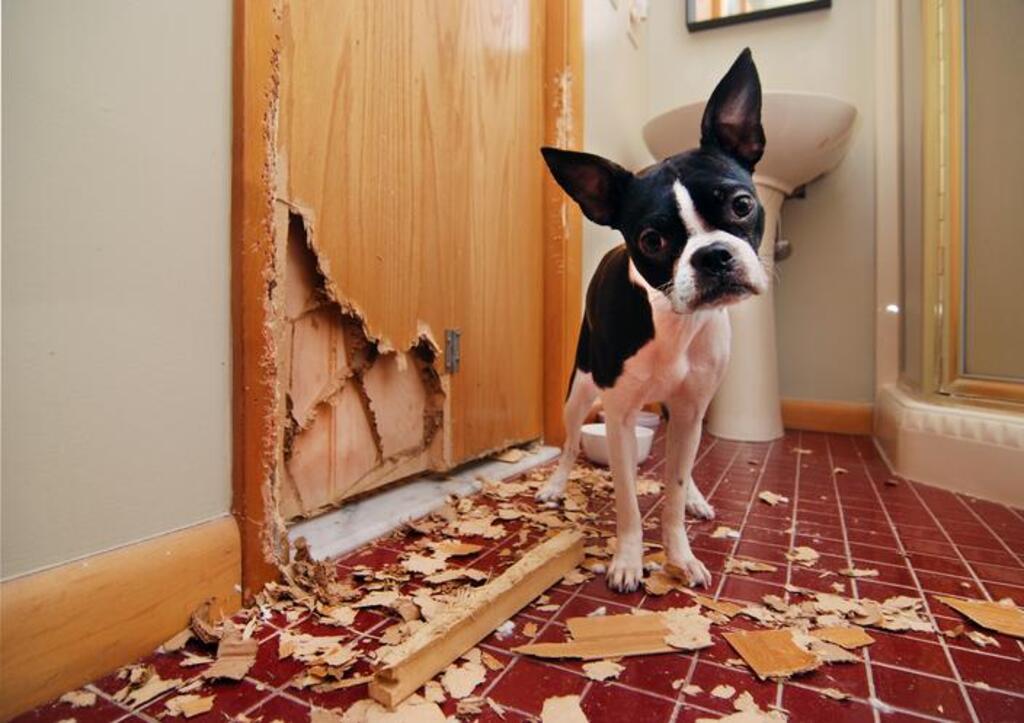 ¿Por qué los perros comen madera?