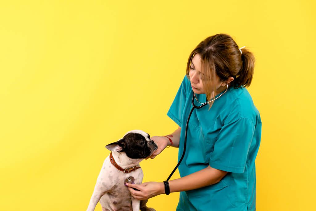 Cómo darle la medicina a un perro