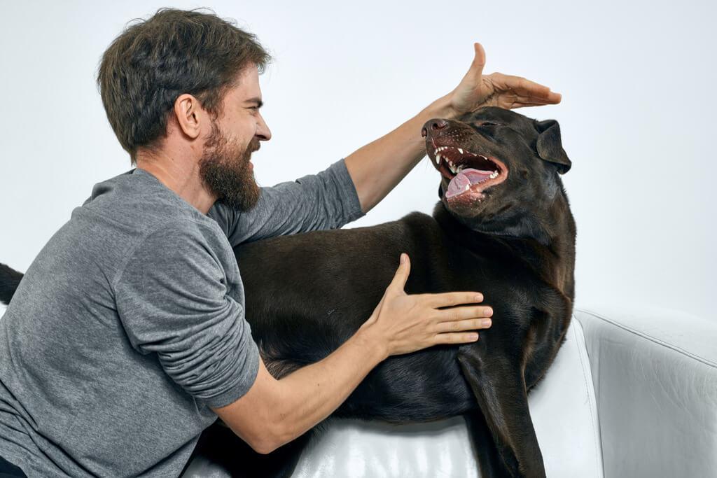 Cómo controlar la agresividad de mi perro