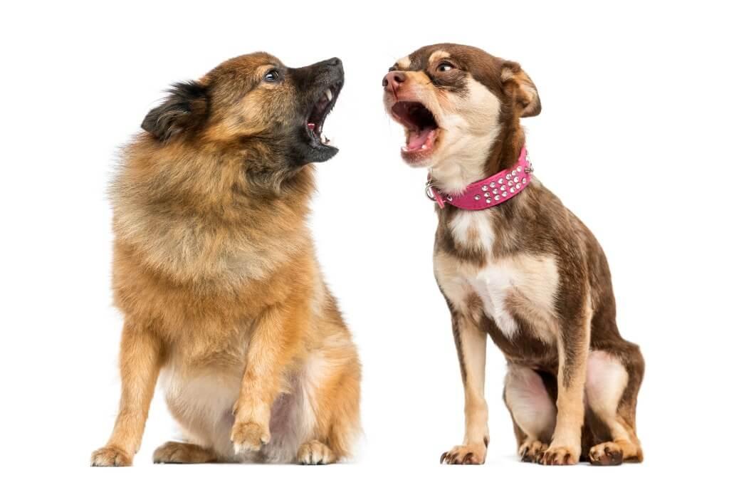 Cómo quitarle lo gruñón a un perro