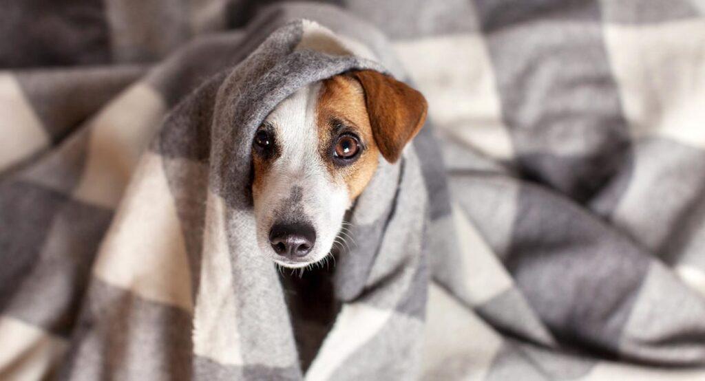 Qué hacer cuando tu perro tiembla