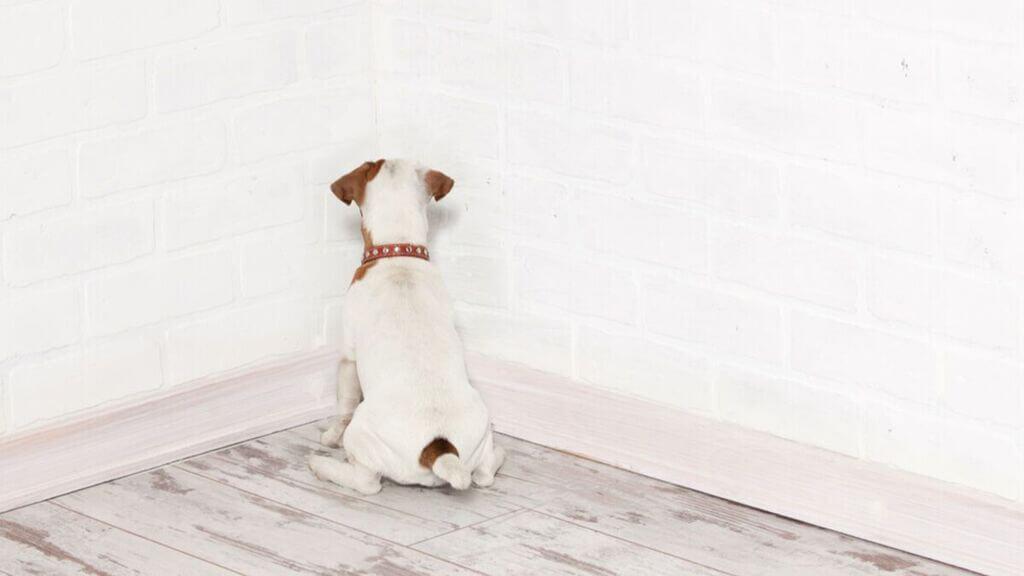 https://entrenatuperro.online/blog/mi-perro-mira-la-pared/