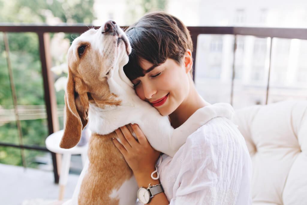 Cómo adiestrar a un beagle