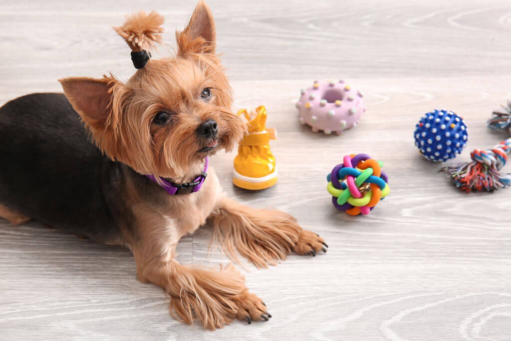 Técnicas adiestramiento canino