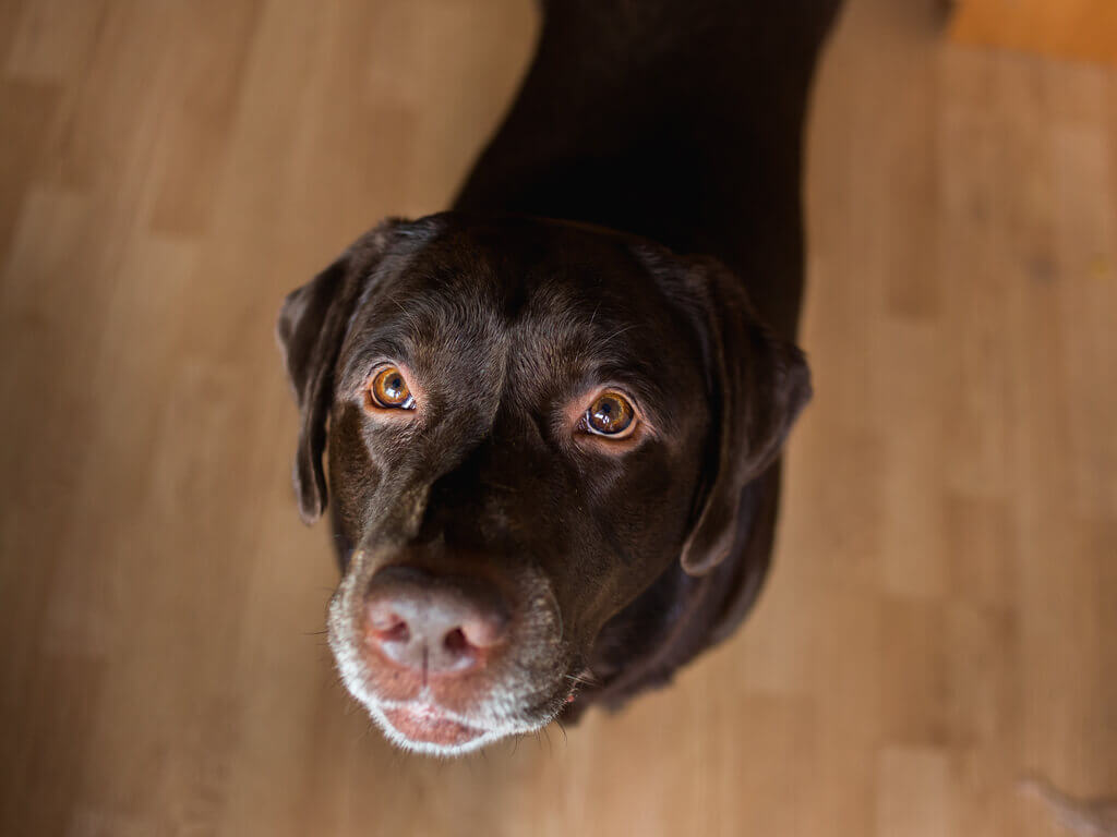 Ansiedad por separación perros tratamiento