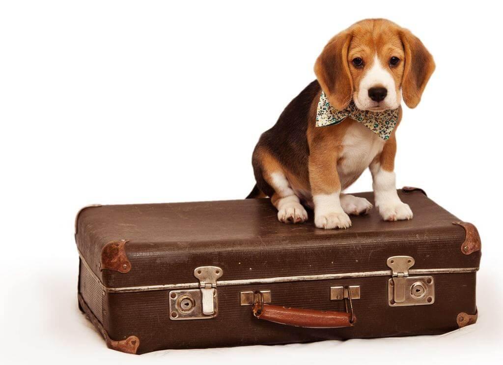 Cómo viajar con tu perro en autobús
