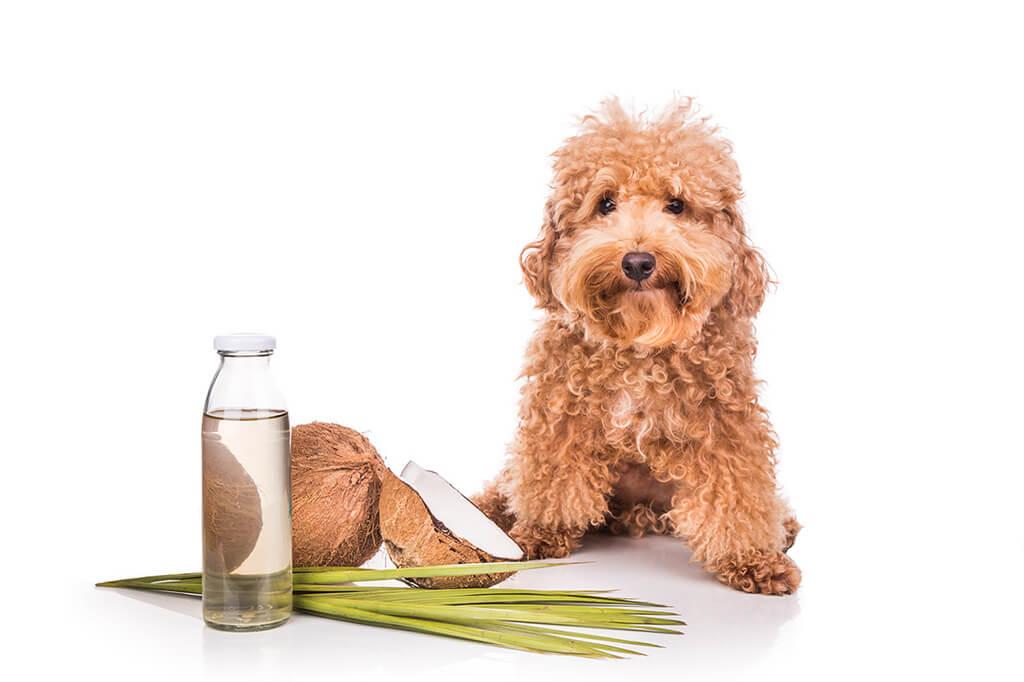 Repelentes para perros caseros