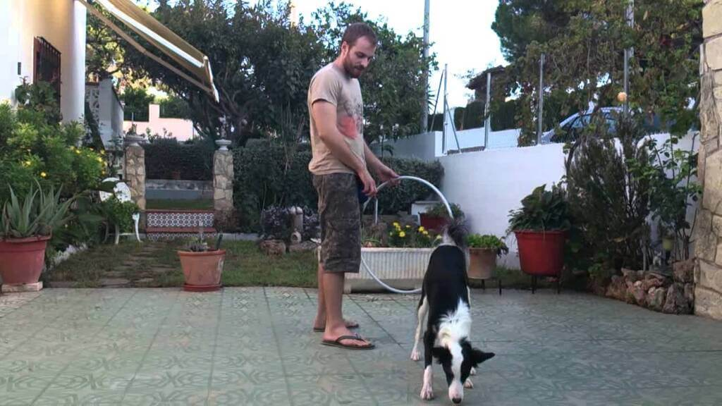 Cómo enseñar al perro a saltar por el aro