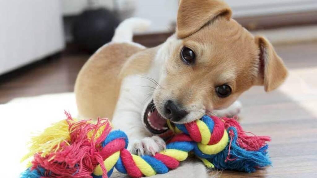 Cómo hacer puzzles para perros
