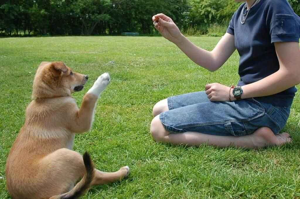 Cómo enseñar a un perro a saludar
