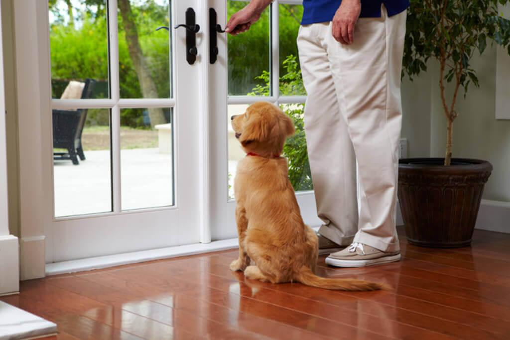 Cómo enseñar a mi perro a cerrar la puerta