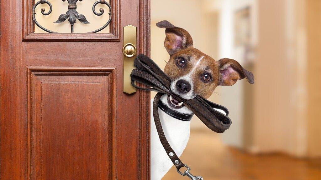 Cómo enseñar a un perro a traer la correa