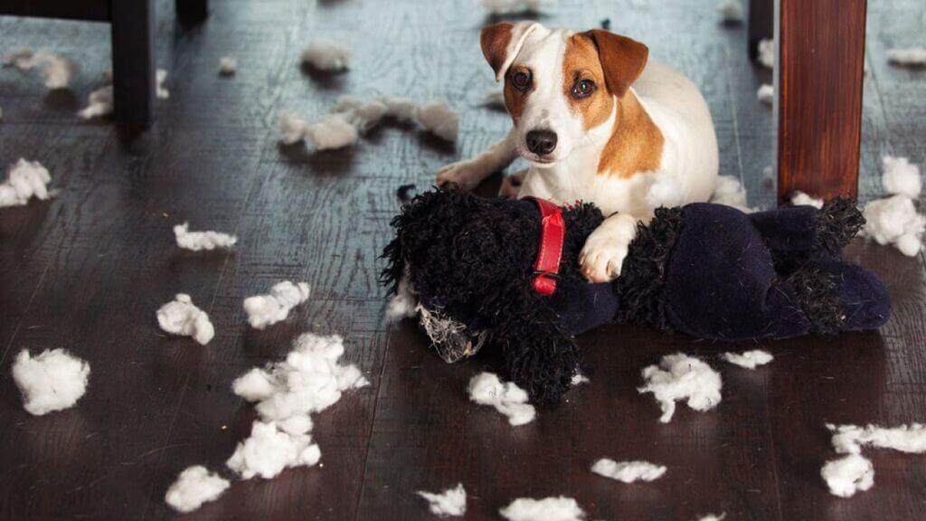 Cómo evitar que mi perro rompa su cama