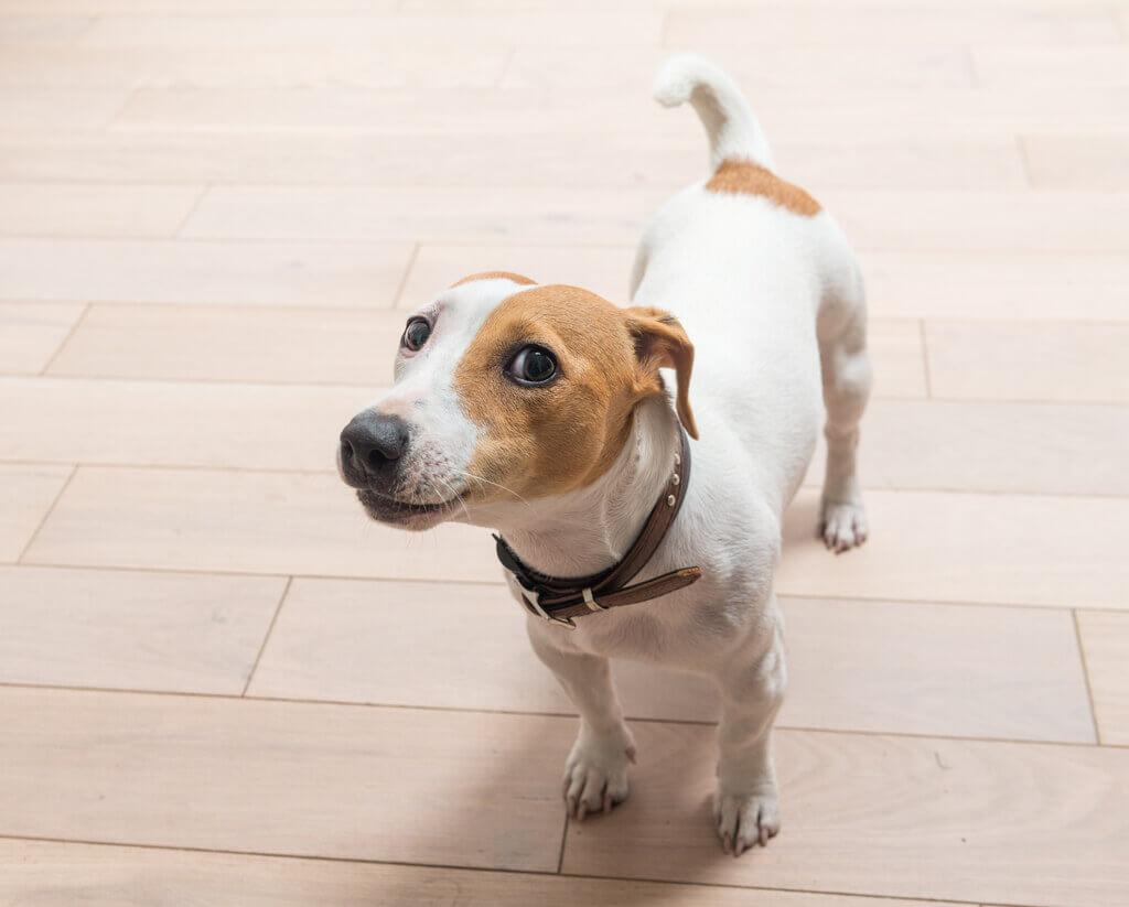 Cómo acostumbrar a un perro a su nueva casa
