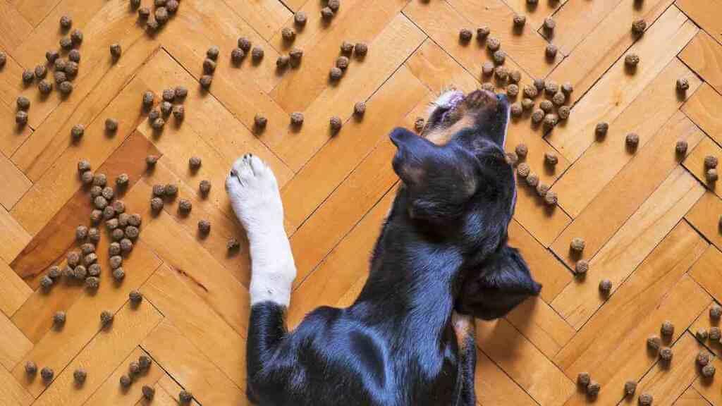 ¿Por qué mi perro tira la comida del plato?