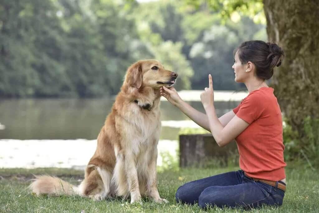 ¿Por qué no gritar a los perros?