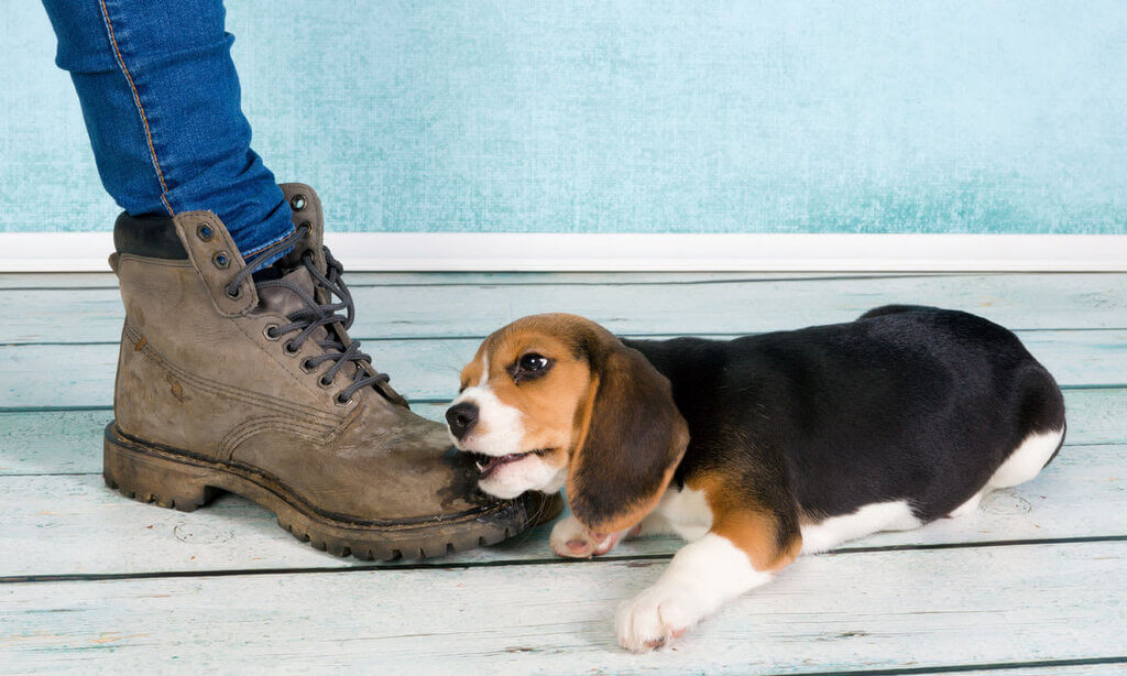 Cómo enseñar a un perro a no morder los pies