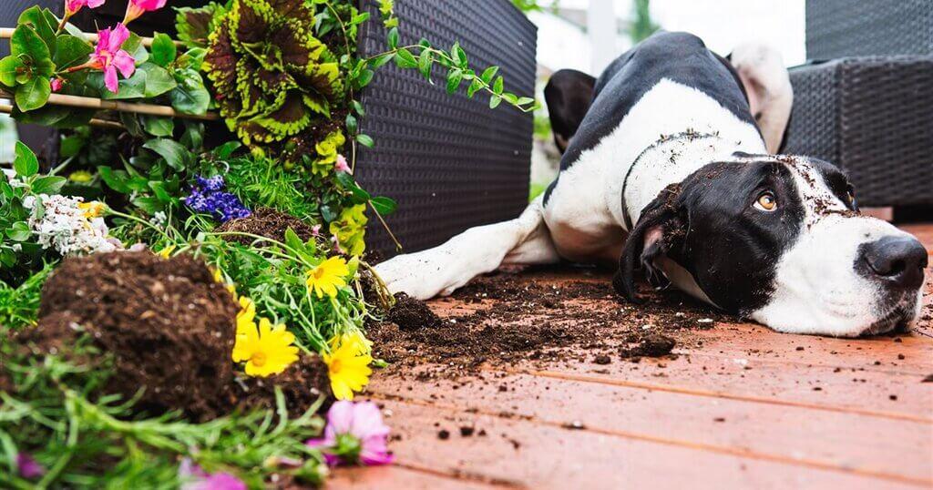 ¿Por qué los perros sacan la tierra de las macetas?