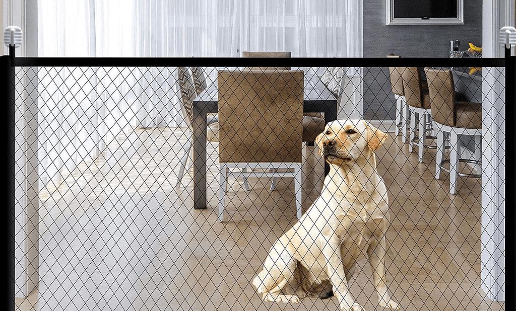 como educar a tu perro para que no salte la valla