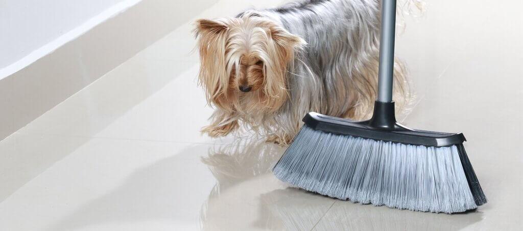 Enseñar perro a dejar de perseguir y morder la escoba