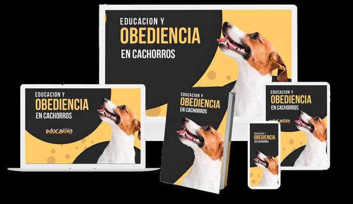 Educación y obediencia en cachorros