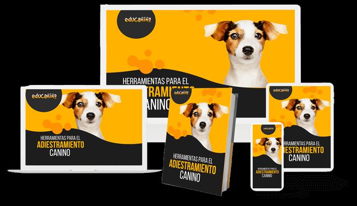 Módulo herramientas para el adiestramiento canino