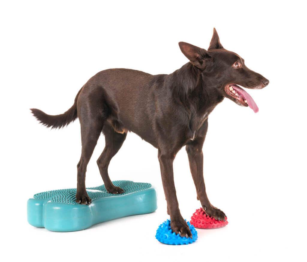 La propiocepción en perros