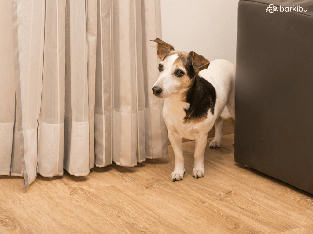 ¿Por qué mi perro ladra cuando tocan el timbre?