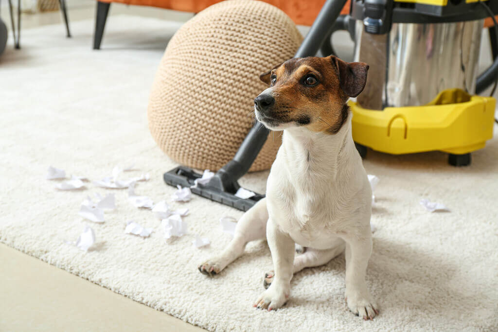 Cómo quitarle a tu perro el miedo a la aspiradora