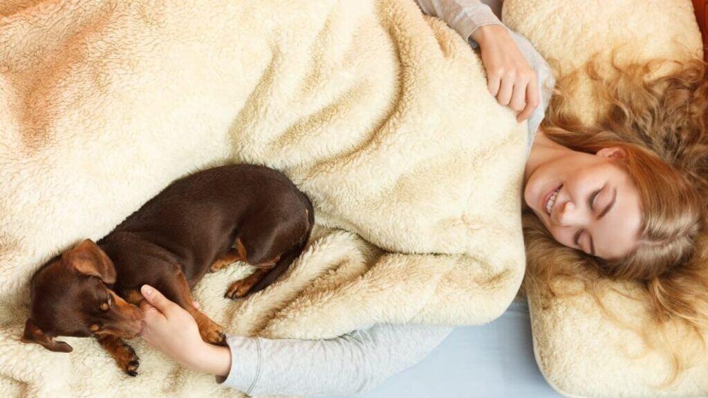 Cómo enseñar a un perro a no subir a la cama