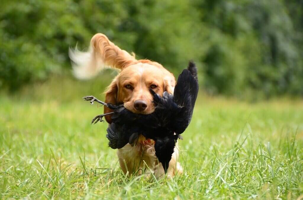 Mi perro me trae animales muertos