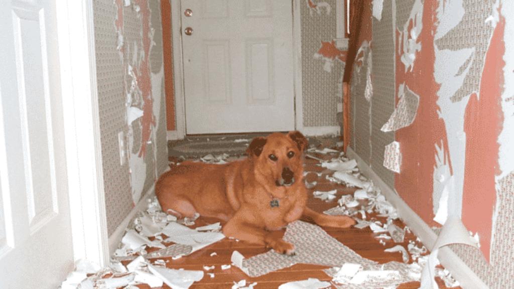 Cómo evitar que mi perro rasque la pared