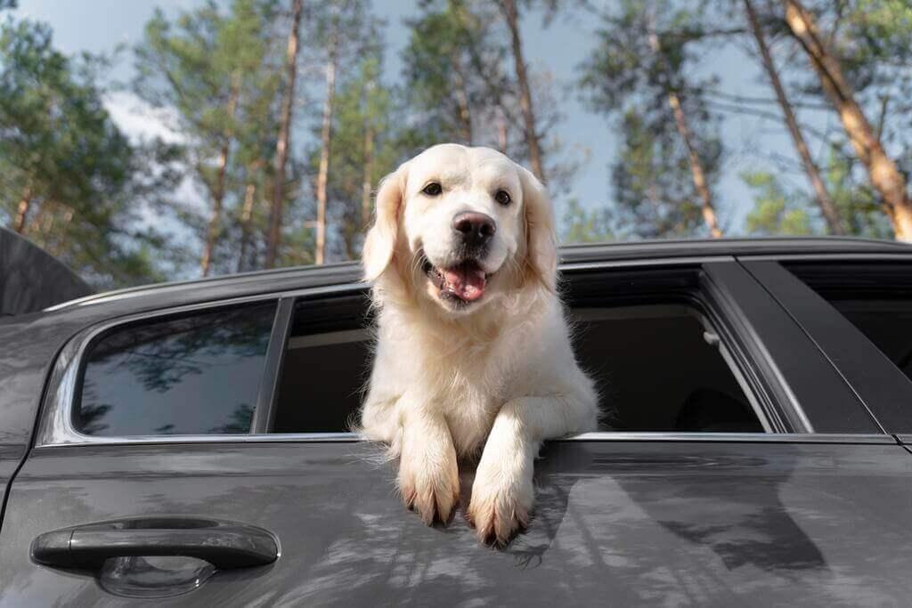 Enseñar al perro a subir al coche