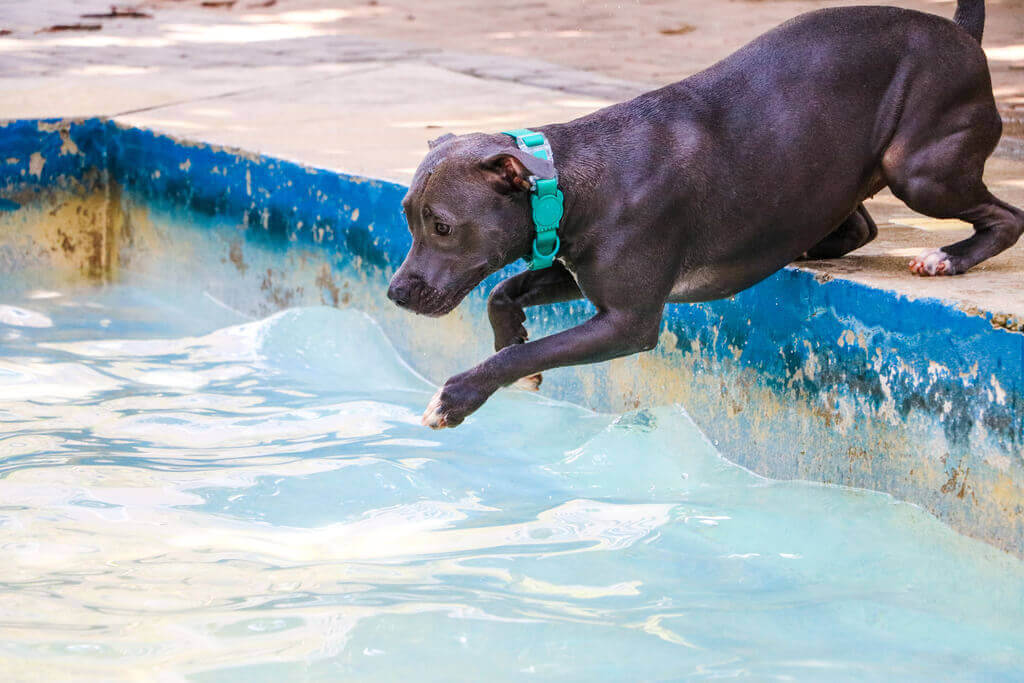 Cómo meter a mi perro en la piscina