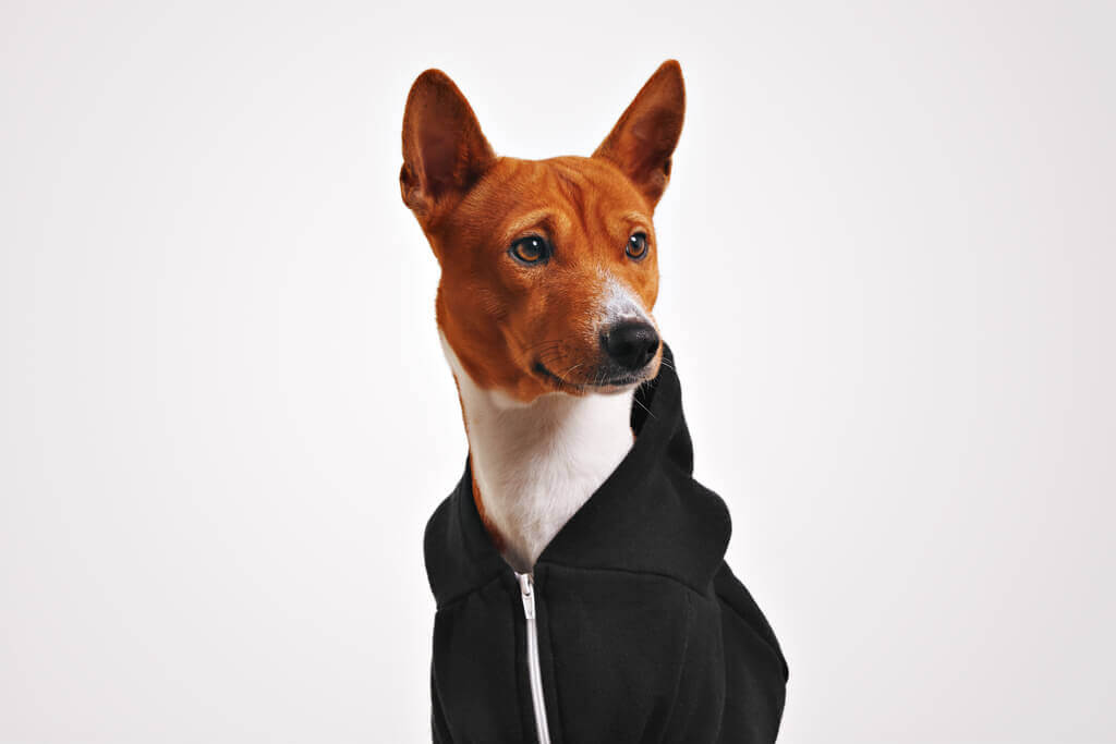 Cómo acostumbrar a mi perro a usar ropa
