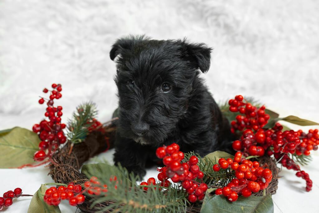 Cómo evitar que mi perro dañe el árbol de navidad